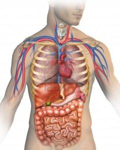 anatomy-of-human-body-parts